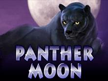Panther Moon - игровые аппараты клуба Вулкан